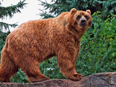 de grootste berensoorten